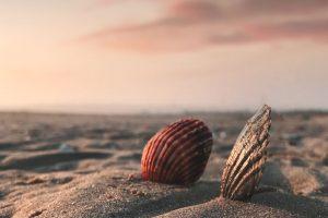 Bücher zum Erholen: Sommerbücher für jeden Ferientyp